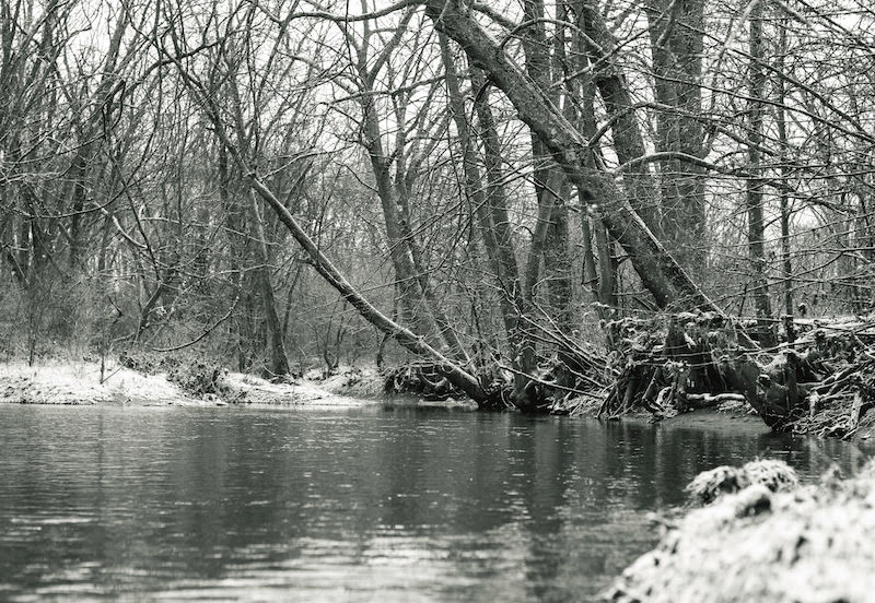 Lynn Michael Martin: Snow